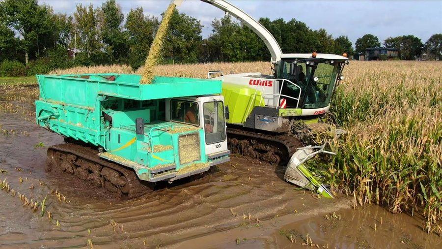 Посмотрите, как собирают урожай кукурузы, когда поле залито водой