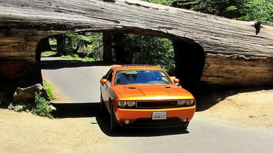 Самые необычные транспортные тоннели в мире: сквозь дом, дерево и пещеру