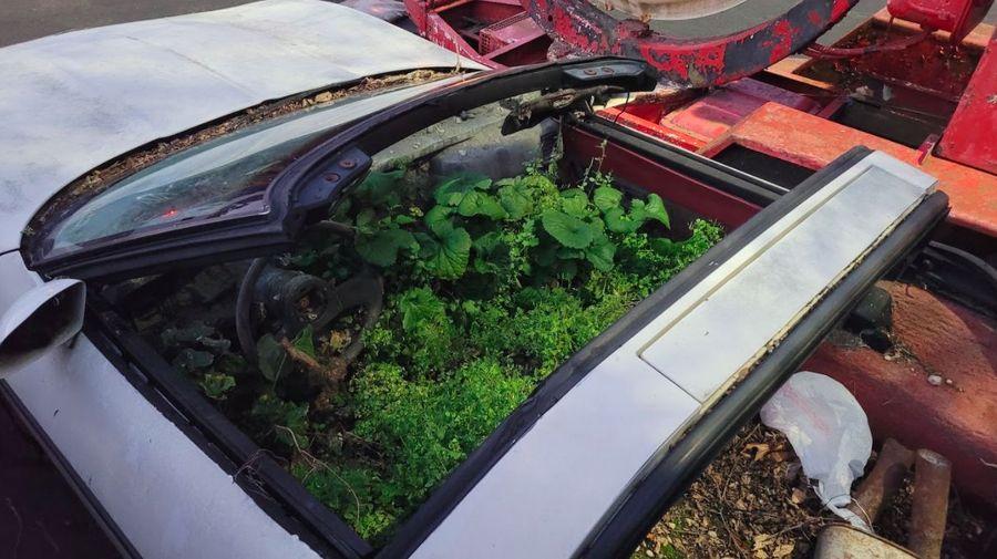 Загадочная история: как в салоне Chevrolet Corvette оказался мини-лес и... бетон?